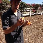 chris-eating-an-orange
