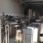 dog-on-15-bbl-brewery-lengthways
